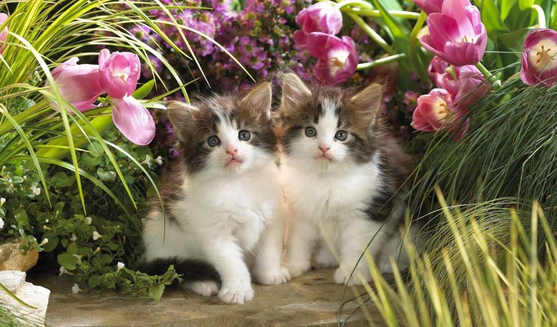 котята, телефон, ноутбук, малыши, животные, планшетный, цветы,