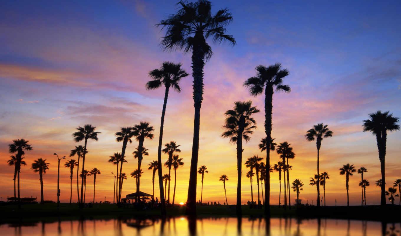 закат, сделать, you, пальмы, пейзажи -, will,