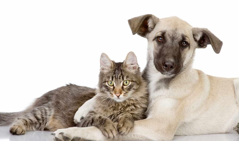 кошки, собаки, кот, собака, zhivotnye, собак, коты, друзья, два,