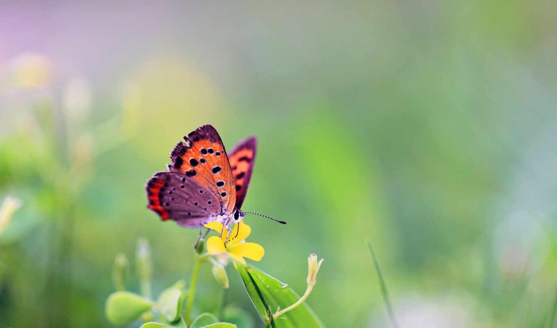 цветы, бабочка, бабочки, трава, рисунки,