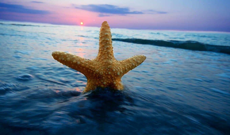природа, море, water, волна, star, горизонт,