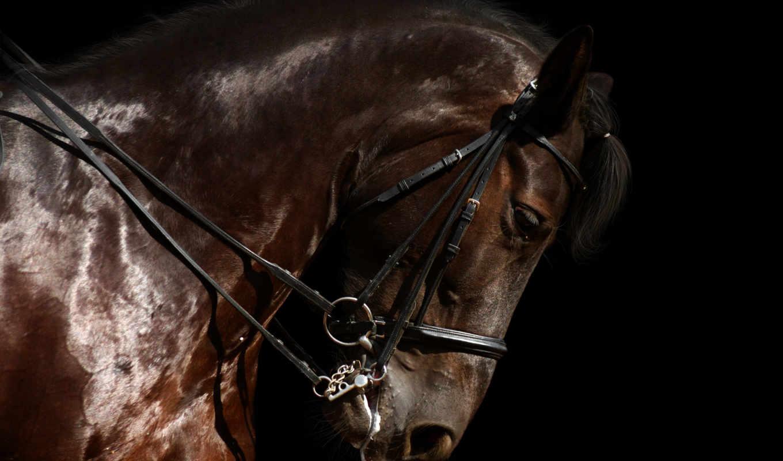 лошадь, красивые, zhivotnye, фотографий, звери, white, лошади, лошадей,