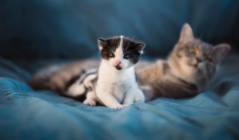 кот, take, млекопитающее, animal, котенок, short