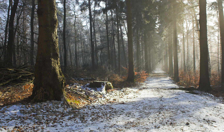дорога, природа, лес, деревья, красота, утро, осень, дымка, зима, картинка, картинку, поделиться,