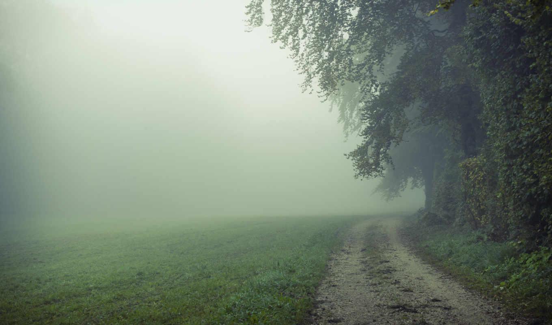 природа, поле, дорога, туман, утро, картинка, картинку,
