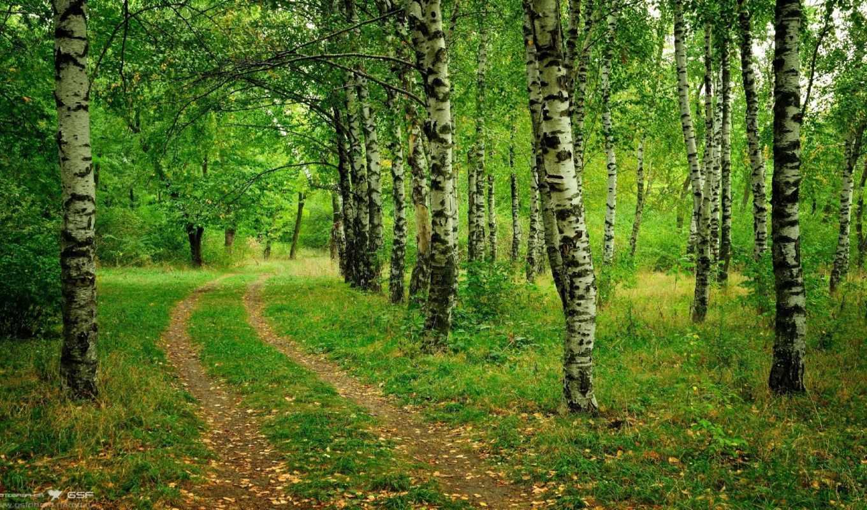 лес, зелёный, деревя, дорога, бамбук, grove, березы, play, трава,