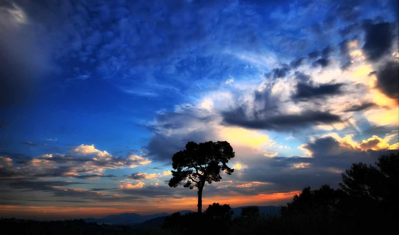 небо, красивое, дерево, мэри, загрузил,