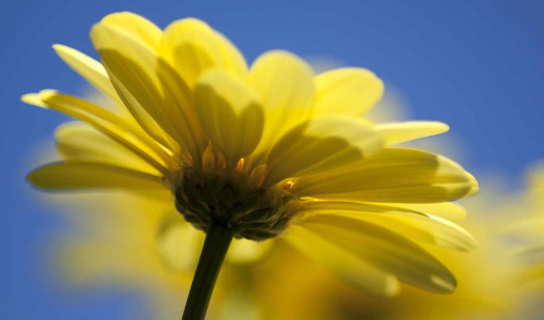 заставки, широкоформатные, макро, цветка, желтого, большого,