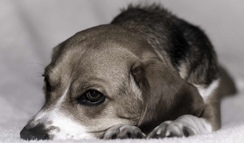 linux, щенок,