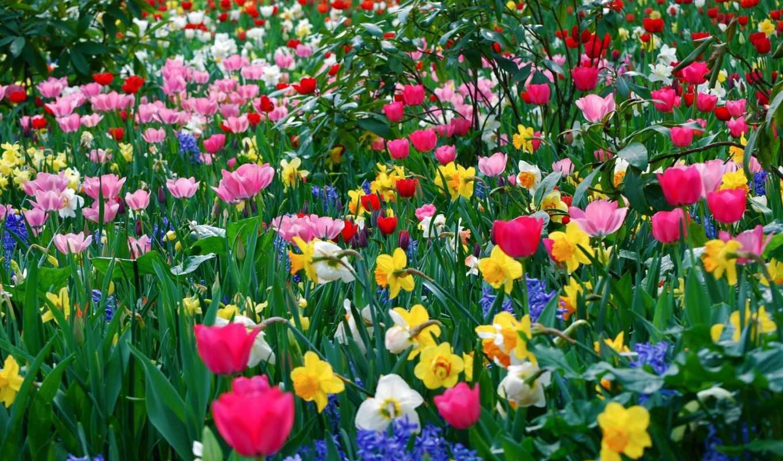spring, цветущее, великолепие, field,