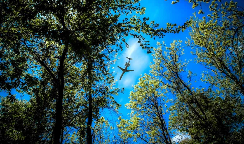 деревья, небо, desire, лес, самолеты, природа, дек, самолёт, верхушки,