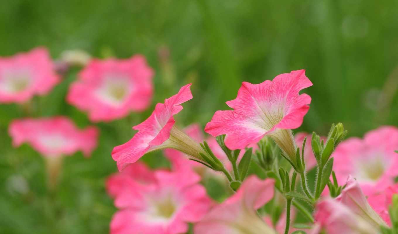 цветы, полевые, полном,