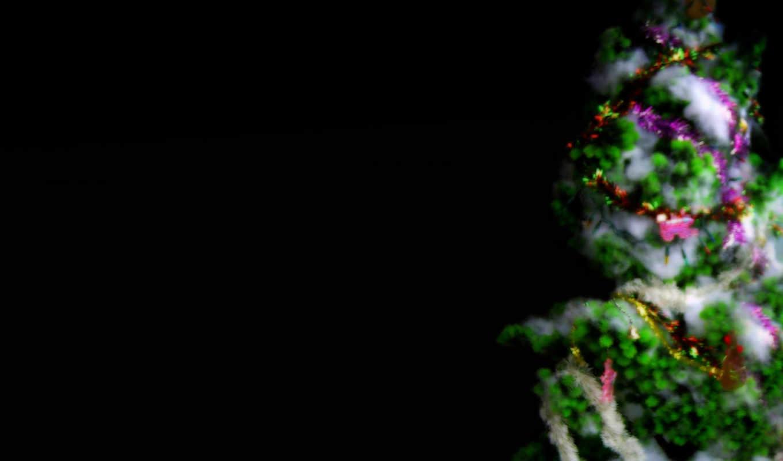 картинку, изображение, обою, christmas, holidays, праздники, графика, ёль,