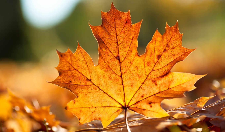 лист, autumn, клен, просмотреть, вершины, горы, домик, прожилки, leaf, nature, iphone, листья,