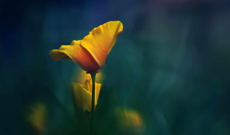 цветок, желтый, стебель, макро,