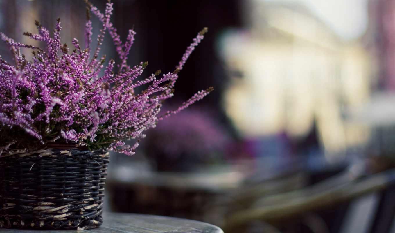 цветы, lavender, чаша, растение, красивые, salt, мыло, корзина, бант, спа,