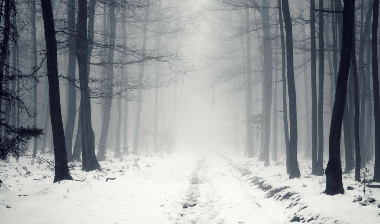 winter, туман, снег, лес, дорога, природа, деревья, ветер,
