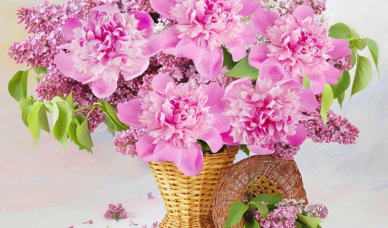сиреневый, цветы, пионы, корзина,