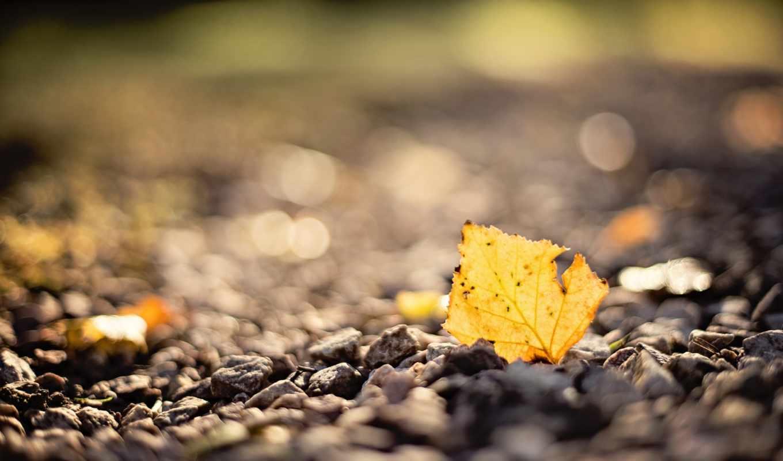 макро, осень, лист, камни, xperia, боке,