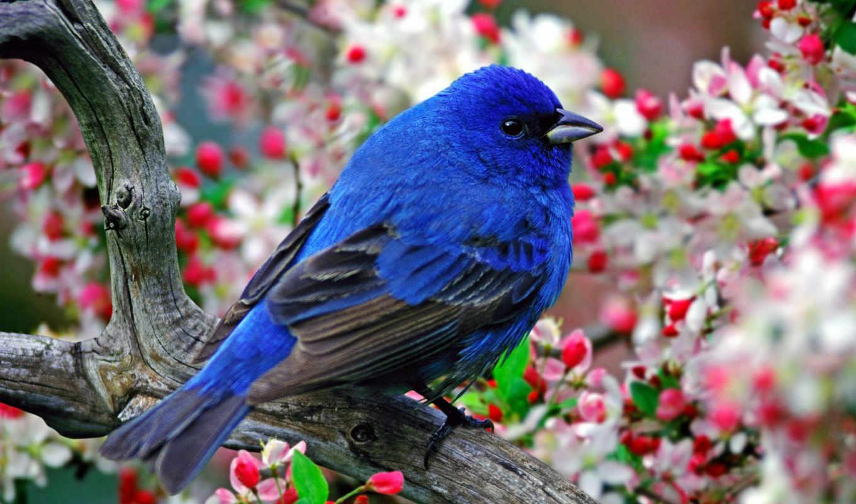 птица, синяя, счастья, птицы, существует,
