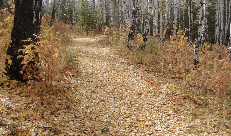 осень, листья, деревья, совершенно, февр, природа, категория,