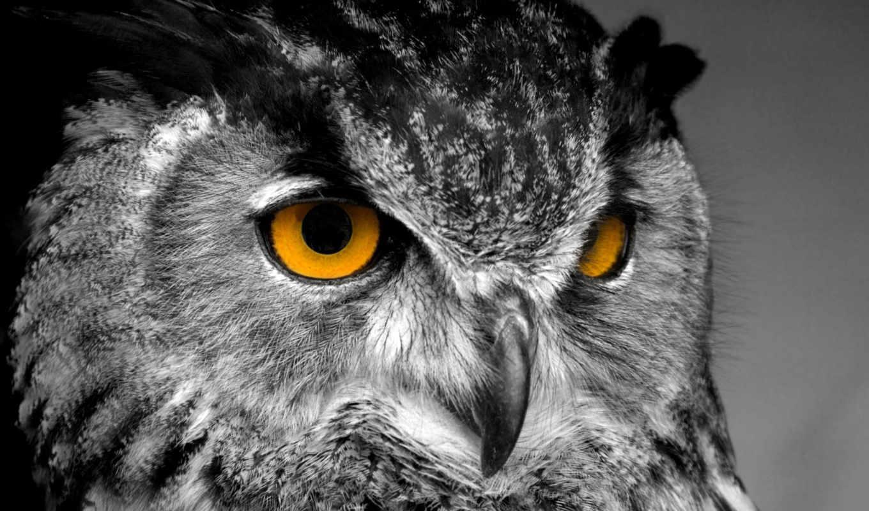 сова, совы, взгляд, картины, схему, поток, птица, wise,