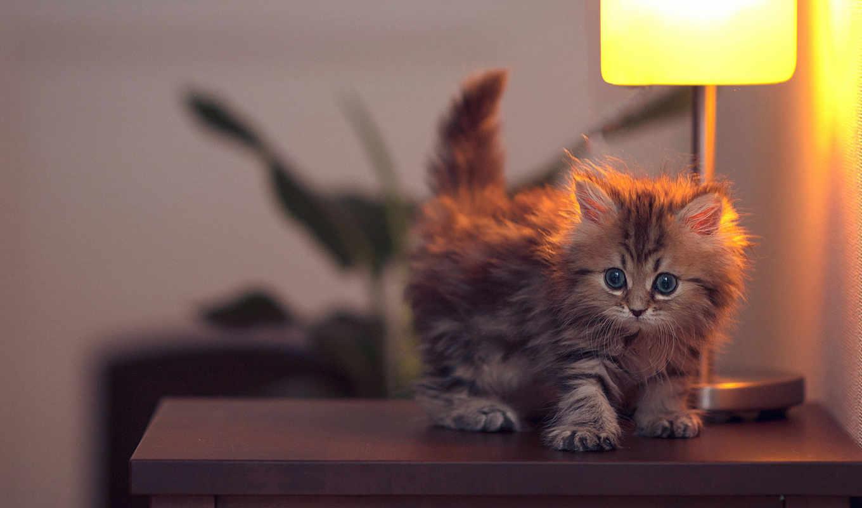 кот, бен, высоком, кошки, котенок, daisy, torode,