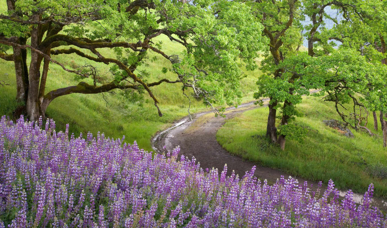 природа, цветы, дорожка, февр, сайта, картинку,