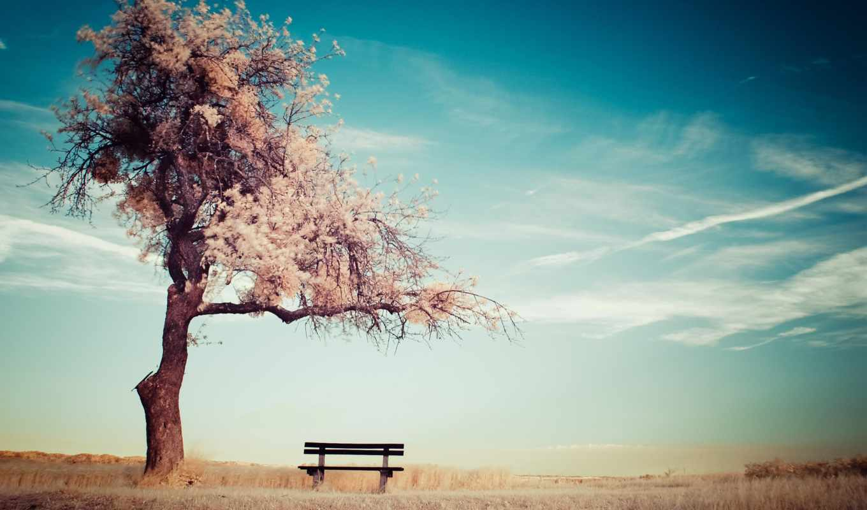 you, небо, дерево, разделе,
