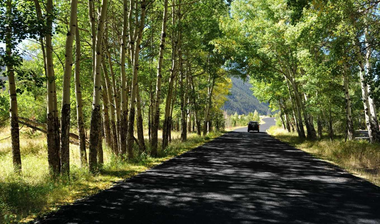 summer, дорога, лес, trees, природа,