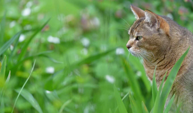 кот, gato, dx, dll, удивлённая, коты,