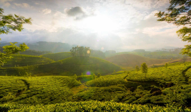 холмы, china, coffee, начал, click, защитить, дек, чайные, плантации,