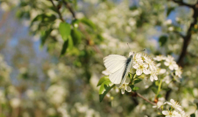качестве, бабочка, только, разрешений, высоком,