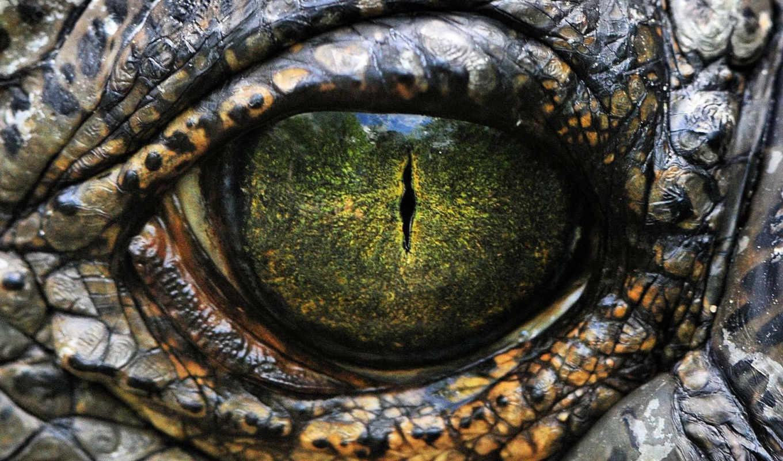 глаз, рептилии, reptile, шкала,