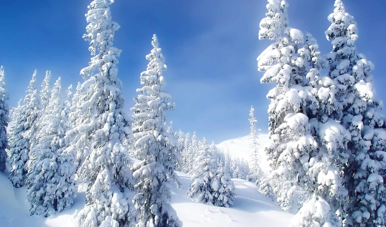 зима, снег, обои, елки, холод, фото, пейзаж, природа