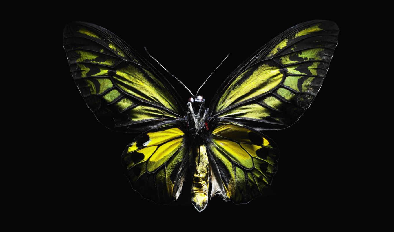 бабочка, обои, черном, желтая, фоне, бабочки, крас