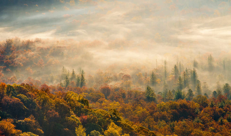 туман, osen, утро, les, priroda,