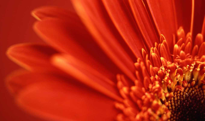 цветы, поле, name, summer, red, сегодня, за, красные,