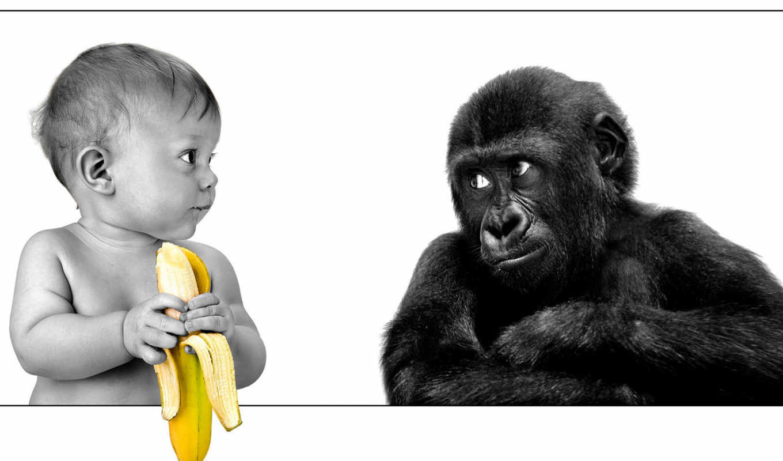ребёнок, обезьяна, черно-белый, банан, обесцвечено
