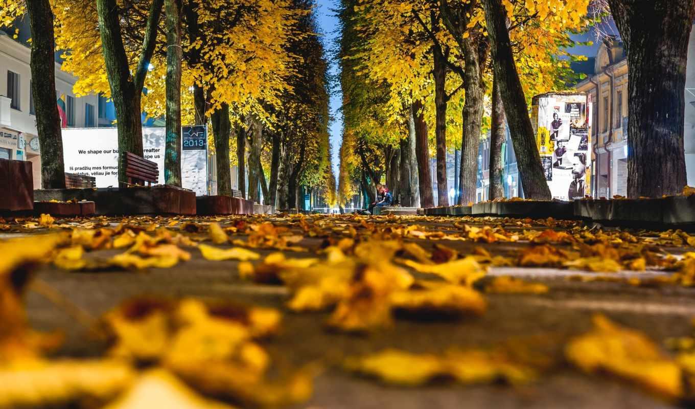 где, дерево, природа, листочки,
