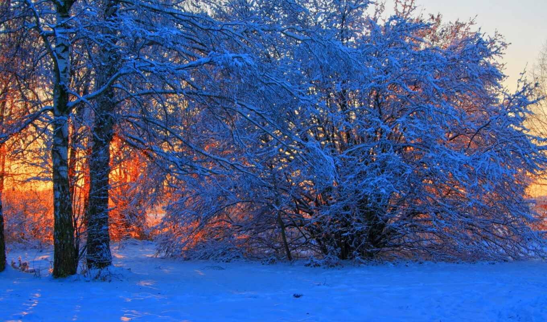 дерево, oir, winter