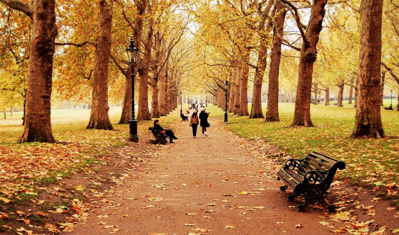 деревья, природа, осень, время, года, листья, пейзаж, люди, скамейка, ребята, человек, листопад, девочка, дети, прогулка, тропинка,