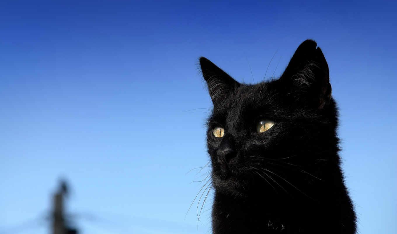 животных, кб, zhivotnye, кот,