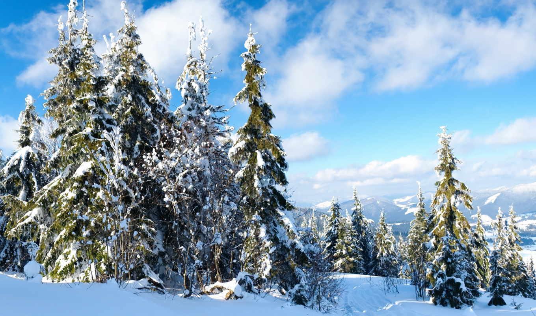 зи, заказать, открытки, trail, winter, небо, елки, снег,