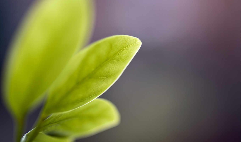 , windows, фон,, idomik, фотографий, интересные, зелень, branch, бесплатные,