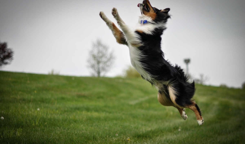 прыжок, собака, снег,