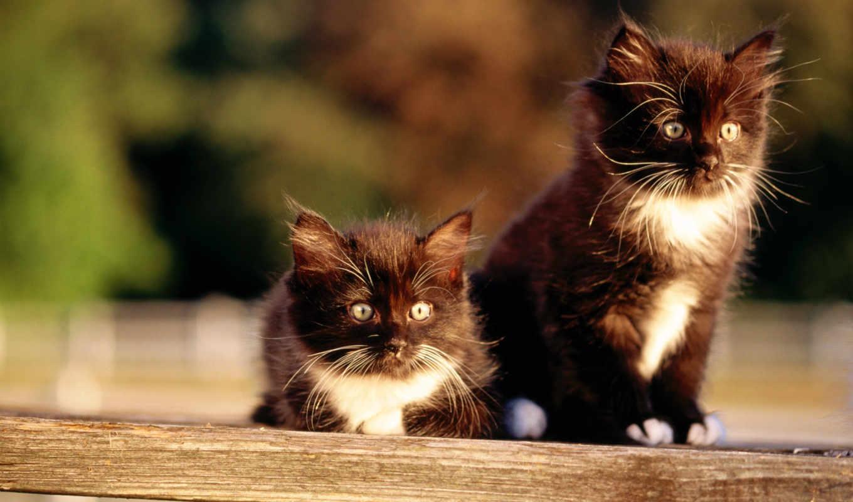 cat, wallpaper, widescreen,, fond, resolution, кошка, котенок, кот,