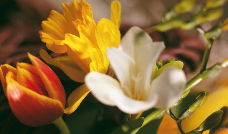 flowers, цветов, цветы, september,