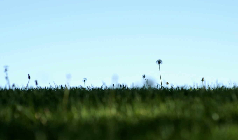 природа, поле, одуванчики, минимализм, небо, картинка, картинку,