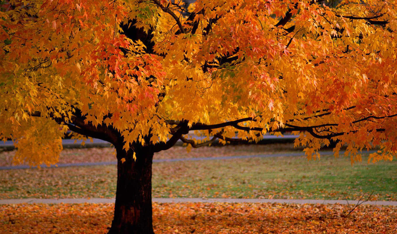 осень, осени, краски, об, нью, картинка, йорке,